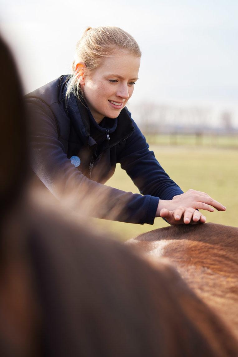 chiropraktik-pferde